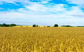 Какая стоимость гектара земли в Украине в 2020 году?